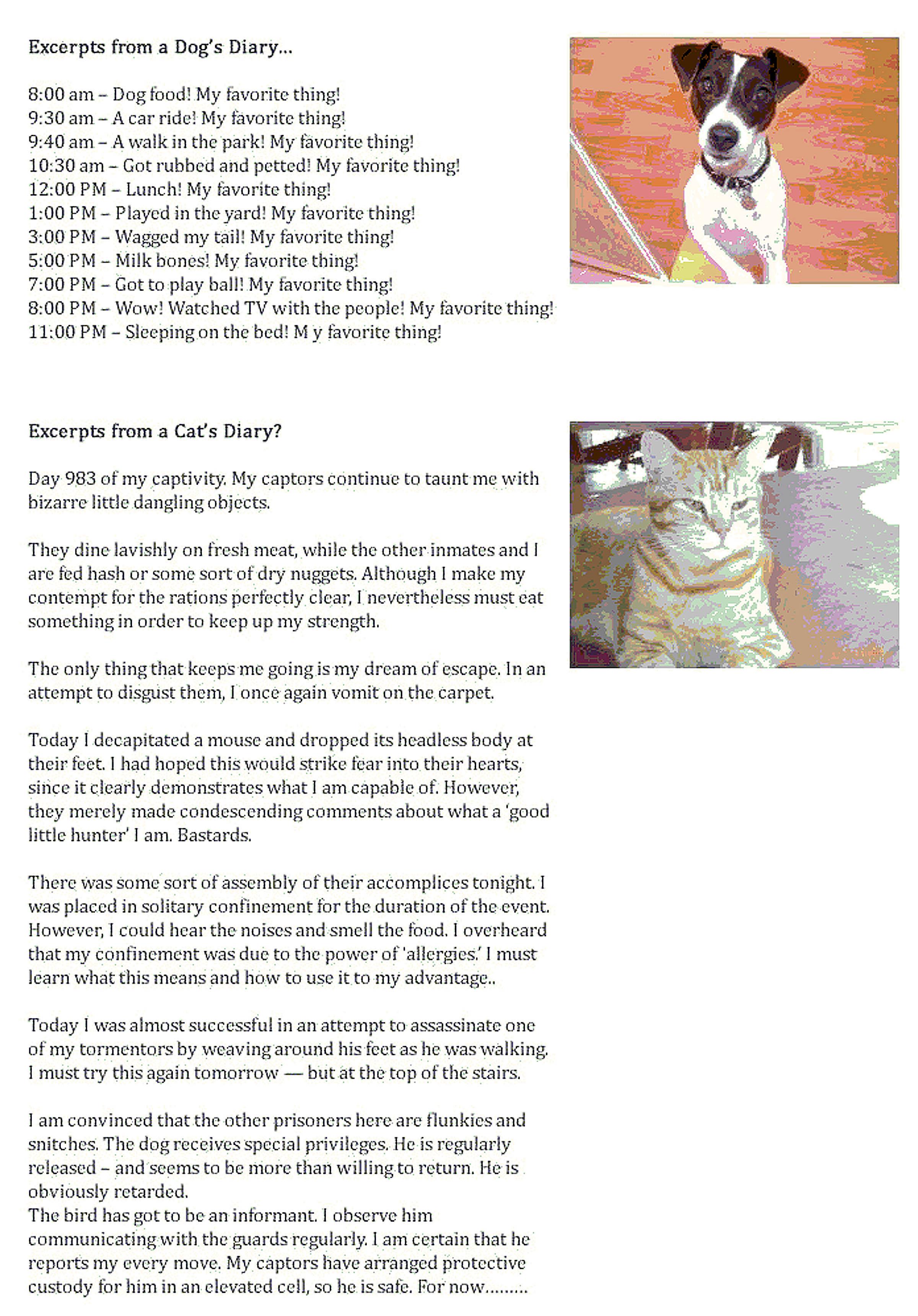 Cat Diary Vs Dog Diary Joke