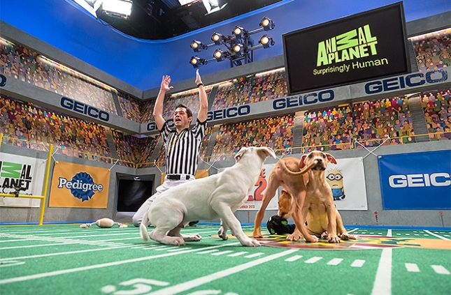 13-puppy-bowl-ix-660x443